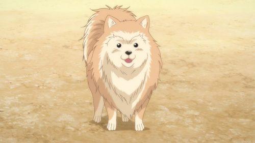 Oda Katsura Nobunaga Wallpaper-1 Dog and Daimyo: Cómo la raza de Oda Katsura Nobunaga representa a un señor de la guerra
